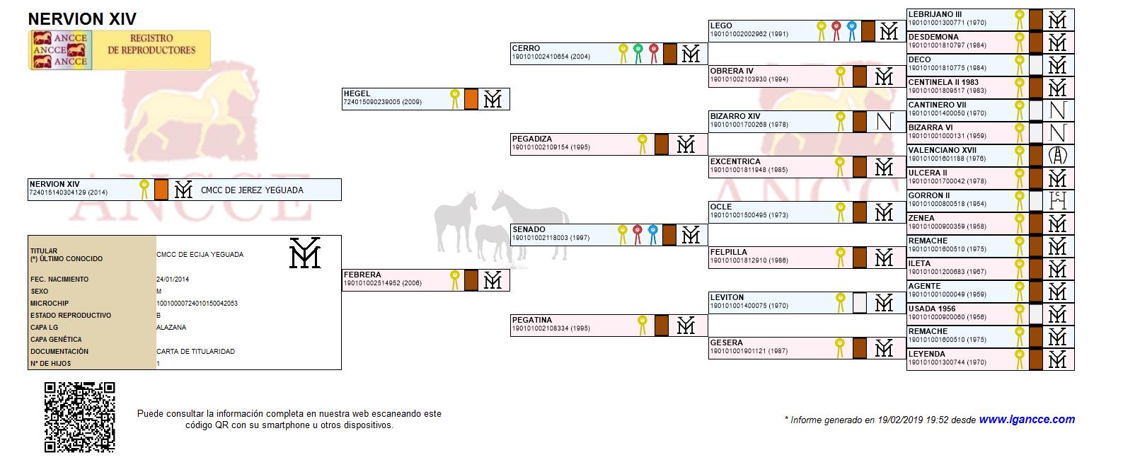 Nervion XIV Genealogíaok
